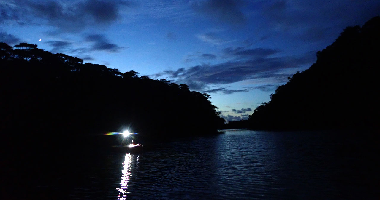 西表島の早朝サガリバナツアーでカヌーを漕ぐ